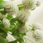 お供え花種類